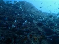 今日の神子元島 #気持ち良い下げ潮からのドリフト[2]