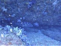 今日の神子元島 #水温20度・水色グレードアップ[5]