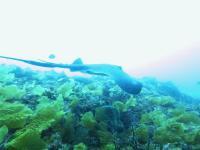 GW五日目 しっかり流れる下り潮にカンパチ群れ、ワラサ群れ[8]