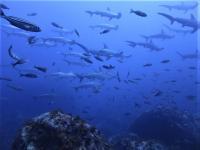 東洋のガラパゴス継続 #どこを泳いでもリバーに当たります[4]