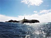 台風前の神子元島 #ハンマー大群れ #マダラトビエイ[1]