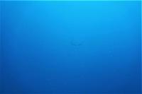 今日の神子元島 #水色水温良好で魚影祭り![5]
