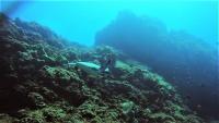 今日の神子元島 #東洋のGALAPAGOS[8]