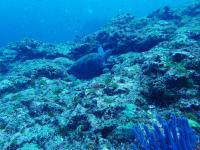 今日の神子元島 #東洋のガラパゴス 今年のハンマー群れは鉄板級[6]