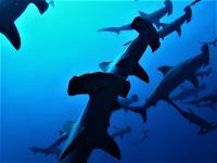 今日の神子元島 #東洋のガラパゴスはしびれる群れ[1]