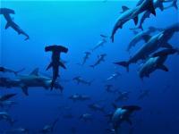 今日の神子元島 #東洋のガラパゴスはしびれる群れ[2]