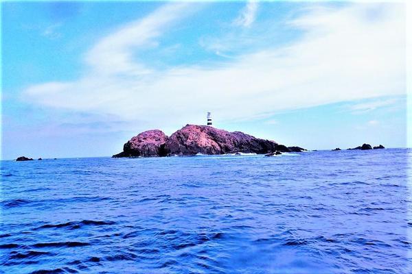 今日の神子元島2D #湿度高く汗ばむ日中ですがハンマー群れ2D