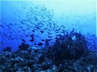 今日の神子元島3ダイブ #リゾート級の水色[5]