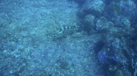 今日の神子元島3ダイブ #魚影濃い素晴らしい秋の海![7]