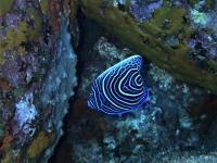 今日の神子元島 #賑やかな水中で青さも増量中![7]