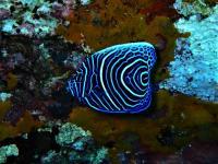 今日の神子元島2ダイブ #魚影濃く賑やか!そして青さも増量中![5]