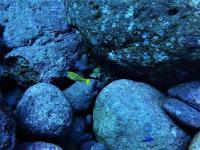 今日の神子元島 #賑やかな水中で青さ増量[7]