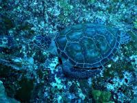 今日の神子元島 #水色はイマイチでしたが魚影濃く賑やかな海![4]