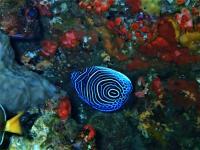 今日の神子元島 #水色はイマイチでしたが魚影濃く賑やかな海![5]