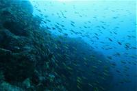 今日の神子元島2ダイブ #浮遊物が目立ちましたが水色アップ![7]