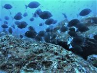 今日の神子元島3Ⅾ #東洋のガラパゴス ワールドクラスの海![7]