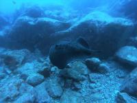 今日の神子元島3Ⅾ #東洋のガラパゴス ワールドクラスの海![8]