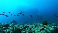 今日の神子元島3ダイブ #東洋のガラパゴス[1]
