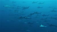 今日の神子元島3ダイブ #東洋のガラパゴス[3]