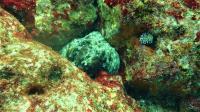 今日の神子元島2ダイブ #不安定な海でしたが[6]