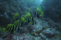今日の神子元島3ダイブ #肌寒い一日でしたが魚影は濃厚です![8]