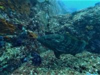 サメだらけ!賑やかすぎる水中はまさに東洋のガラパゴス認定![8]
