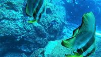 今日の神子元島 東洋のガラパゴス オプションはジンベイザメ[6]