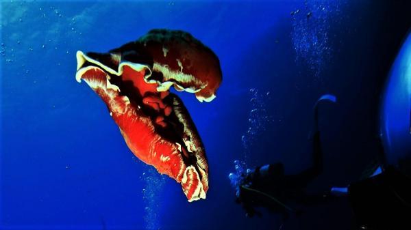 中層の小群れ単体~大きな群れは深場で苦戦でしたが最高の海!