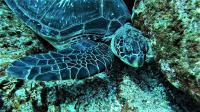 中層の小群れ単体~大きな群れは深場で苦戦でしたが最高の海![7]