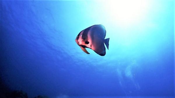 待ちに待った青い潮! 東洋のガラパゴス