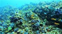秋の神子元島は素晴らしい魚影たち[6]
